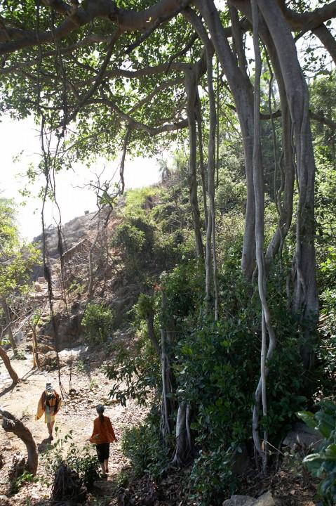 Indien, Karnataka, Gokarna,  Kueste, Weg zwischen den Straenden, Wanderung, Vulkan Gestein