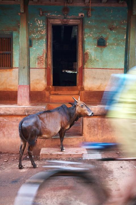 Indien, Karnataka, Gokarna, Koorti Teertha, Tank, Becken, heilige Waschungen, Stufen, Daemmerung