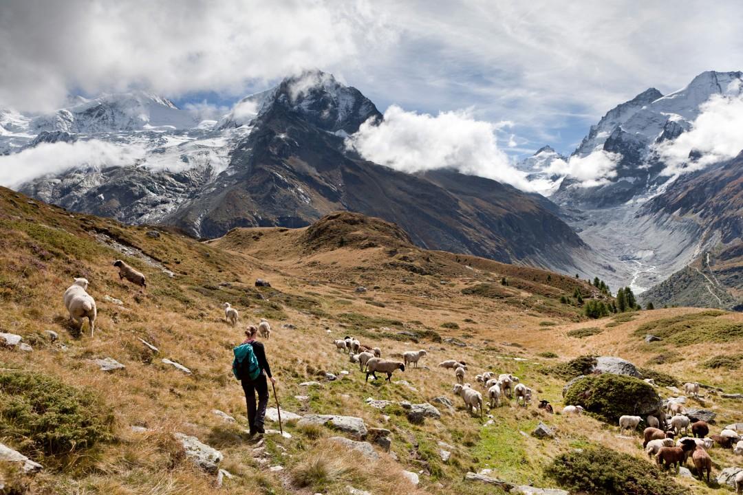 Europa, Schweiz, Wallis, Aufstieg von Zinal zum See, Lac de Arpitetta, Zinalrothorn, Berg 4221 meter, Schalihorn, Gletscher, Bergwiese, Schafe,  Frau, wandert, allein, Einsamkeit, Natur,