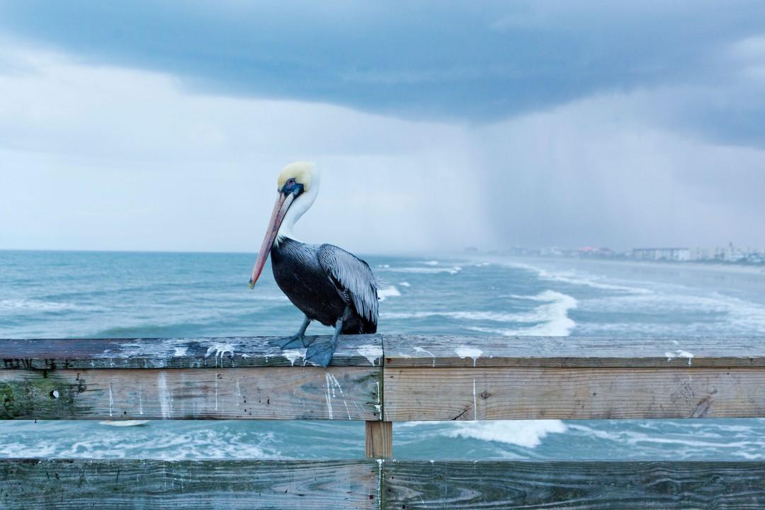 Reise Travel laif_creative USA, Amerika, United States of America, Florida, der Norden, Cocoa Old Cocoa Village, Cocoa Beach/ Pier, Regen, Unwetter, Wolken, Pelikan