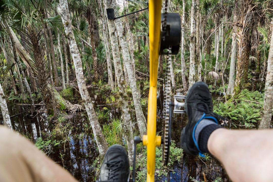 Reise Travel laif_creative USA, Amerika, United States of America, Florida, Orlando, Themenparks, Forever Florida, Fahrrad in den Baumspitzen, 4755 N Kenansville Rd, FL, Vereinigte Staaten +1 407-957-9794  · floridaecosafaris.com, - 85b. Forever Florida ist ein Naturschutzgebiet/Öko-Park: Baumfahrrad-Parcours der Welt (den Cypress Canopy Cycle = ein Liegerad, mit dem man durch die Baumwipfel radelt, eine Zipline,