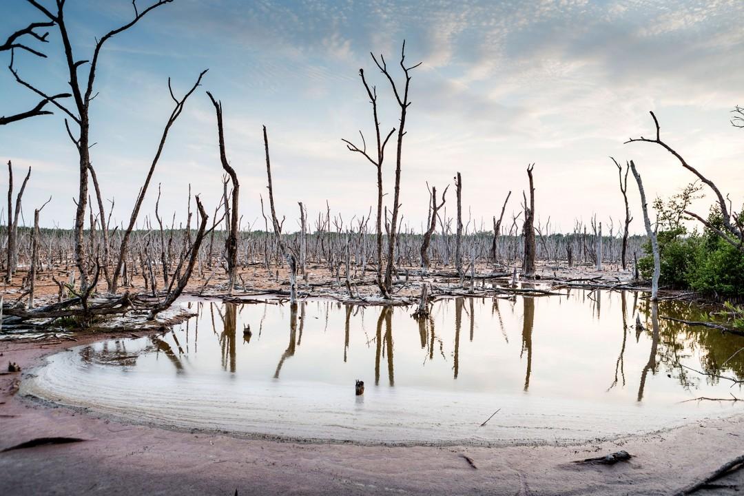 laif creative reise travel USA, Amerika, United States of America, Florida, Evergades Golf von Mexico, Marco Island, gestorbene Mangroven, tot wegen Mangel an Suesswasser versalzt,