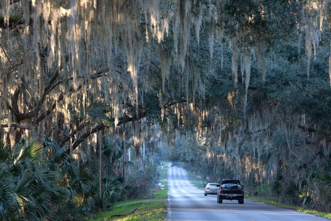 "Reise Travel laif_creative USA, Amerika, United States of America, Florida, der Norden, bei Gainesville, Micanopy: Floridas (Staat) aeltester Ort. ""Spanish Moos""-Street"