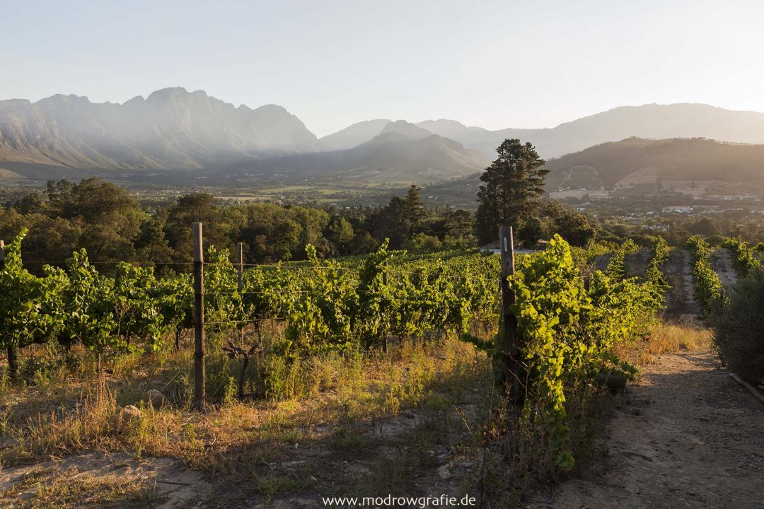 Suedafrika, Weingut bei Franschhoek, Landwritschaft, Wein, Weinbau, Weinanbau,  Landschaft, Afrika, Engl:  Winery near Franschhoek, Western Cape, South Africa, Landscape, Dieu Donne Vineyards,