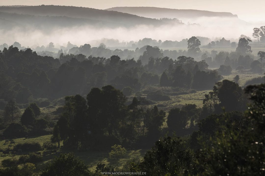 Suedafrika, Afrika, Garden Route, Plettenberg Bay,  Reise, Landschaft, Nebel am Morgen,  Engl: Southafrica,  Landscape, Gardenroute, Travel, Howberry Hills, Farm, Fog, Morning, Nature,