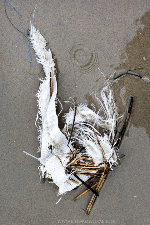 Deutschland, Niedersachsen, Friesische Insel, Borkum, Strand, Duenen, Greenpeace Aktivisten, reinigen den Strand,