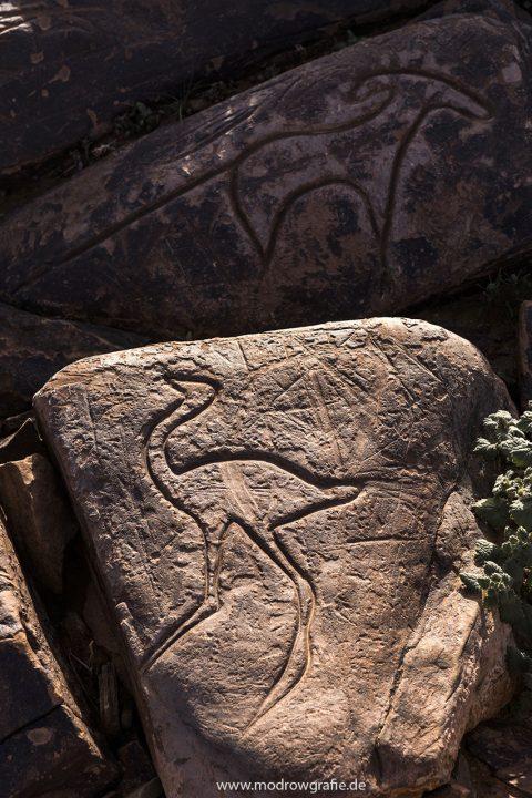 Koenigreich Marokko, Ait Quazik, Gravuren in Steinen, engl: Rock Carvings, Rock Art, 5000 years old,