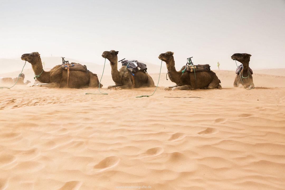 Koenigreich Marokko, Sahara, M'Hamid El Ghizlane, Draa Valley,  Wueste, Duenen, Sand, Taragalte Festival, 2018, Berber Musik, Fest, Party, Zeltlager, Lifemusik, engl: Music Festival, Sand Dunes, Sahara, desert, Berber Music, Sandstorm, Camels, Dromedar,