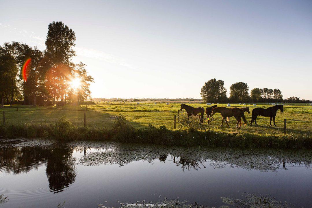Europa, Deutschland, Niedersachsen, Ostfriesland, Westgrossefehn, Kanal, Pferde, Abendsonne